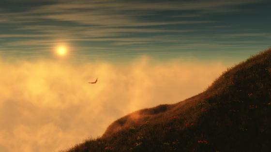 Flying bird in the sunset wallpaper
