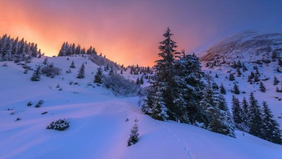 Winter mountains in the sunset wallpaper