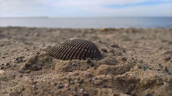 A shell in the sand wallpaper