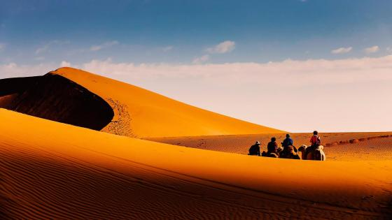 Camel riding in the Tengger desert wallpaper