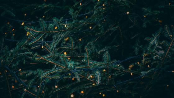 Christmas tree with garland lights wallpaper