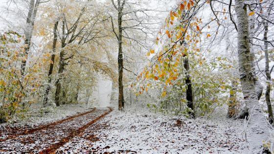 Autumn snow wallpaper