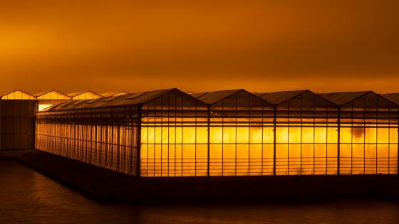 Greenhouses - Hoek van Holland wallpaper