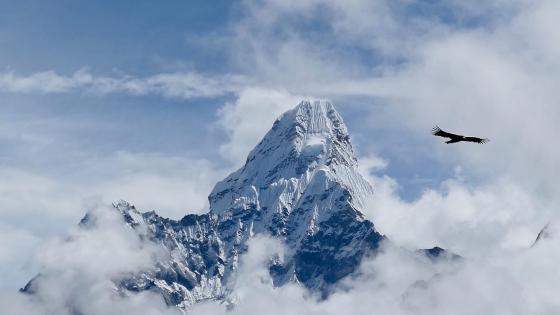 Flying bird above the Himalaya wallpaper
