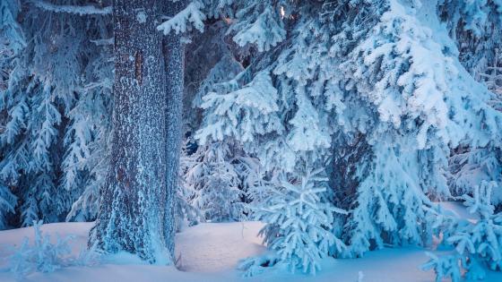 Blue winter ❄️ wallpaper