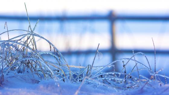 Frozen grass wallpaper