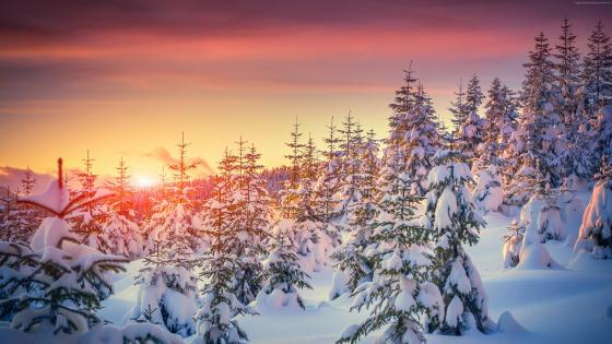 Winter sunset wallpaper