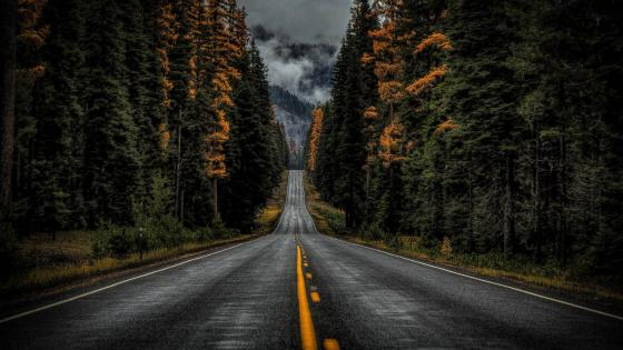Rainy road wallpaper