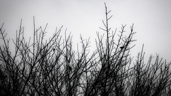 Monochrome twigs wallpaper