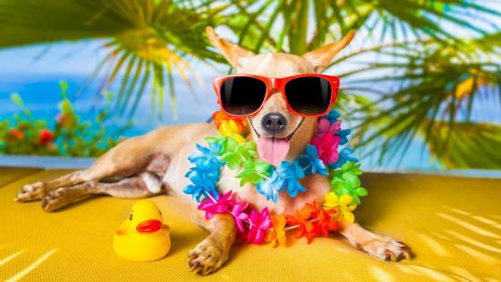 Dog vacation wallpaper