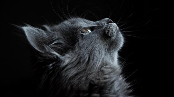 Cat profile wallpaper