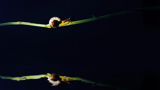 Snail wallpaper