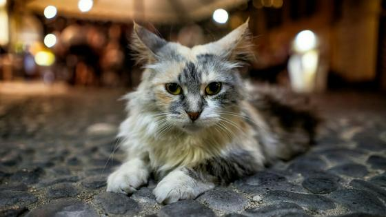 Cat on the street wallpaper