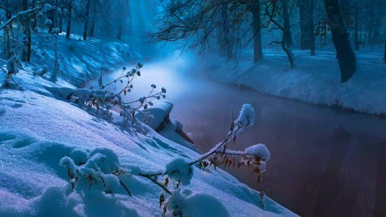 River in the winter forest wallpaper
