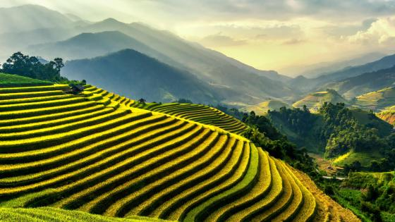 Mu Cang Chai rice terrace fields wallpaper