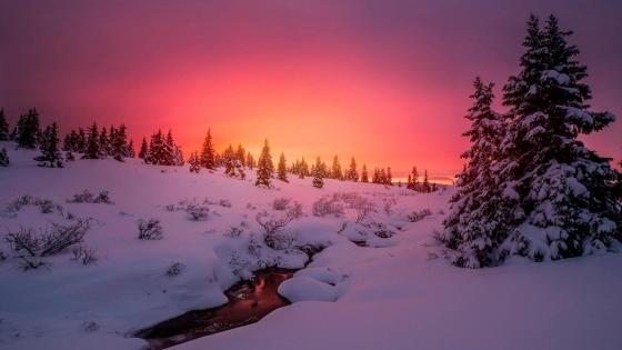 Purple winter sunset wallpaper