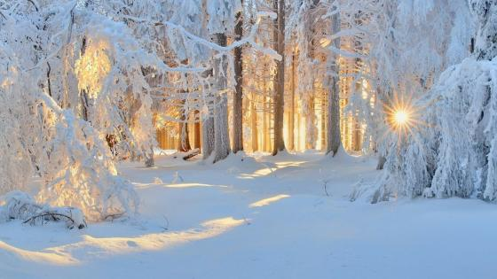 Winter sunlight wallpaper