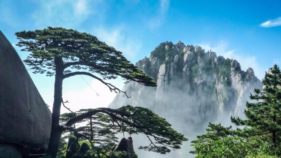 Huangshan Welcome Pine wallpaper