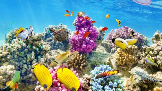 Fish and Corals wallpaper