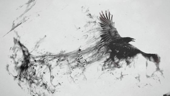 Flying raven artwork wallpaper