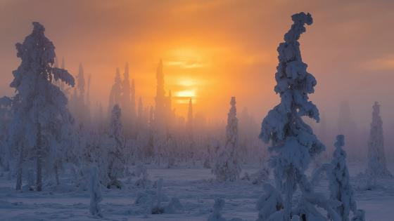 Muddus National Park - Lapland wallpaper