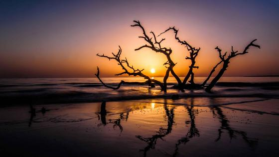 Driftwood Beach - Jekyll Island, Georgia wallpaper