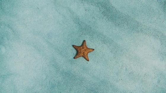 Starfish in the sea wallpaper
