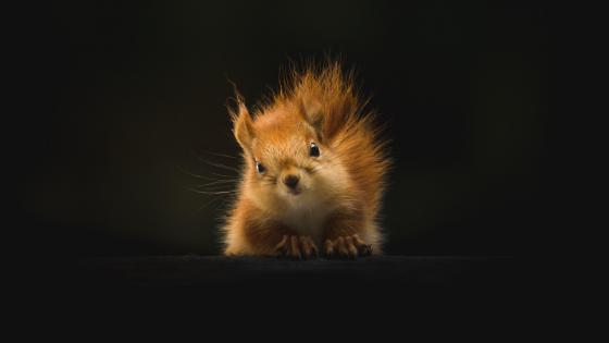 Cute squirrel wallpaper