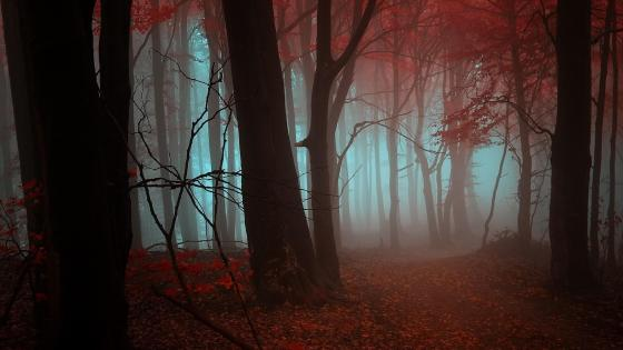 Autumn forest in the mist wallpaper