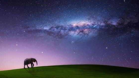 Elephant and Milky Way - Fantasy art wallpaper