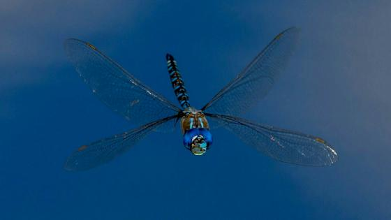Dragonfly in the blue sky - Macro photography wallpaper