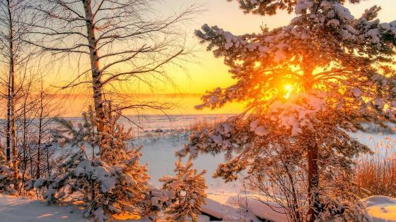 Winter in the Leningrad Region, Russia wallpaper