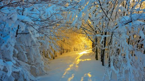 Snowy path in winter sunlight wallpaper