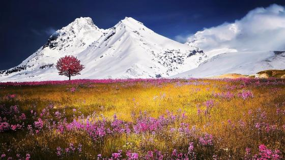 Flower field in the Swiss Alps wallpaper