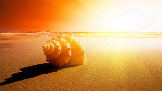 Shell in the sand wallpaper