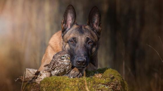 Amazing Friendship Between a Dog and Owl wallpaper