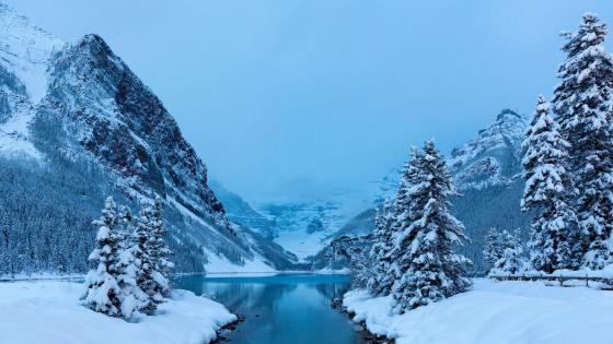 Winter Lake Louise wallpaper