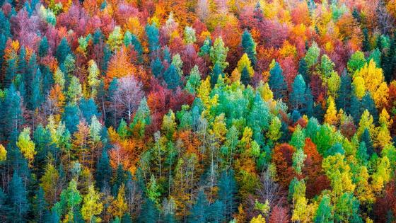 Colorful fall forest wallpaper