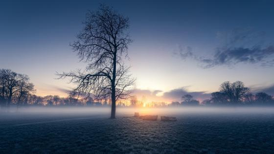 Misty morning wallpaper