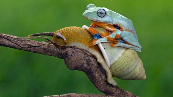 Snail riding wallpaper