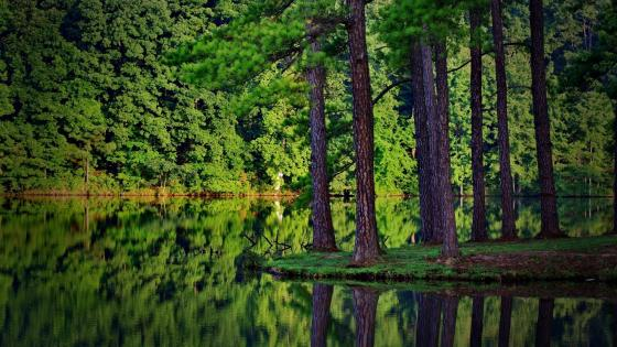 Green forest reflection wallpaper