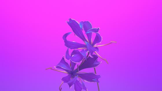 Purple flower illustration art wallpaper
