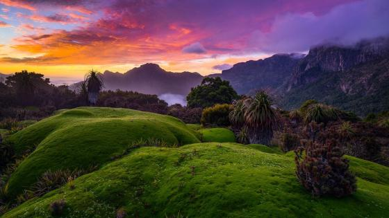 Southwest National Park, Tasmania (Australia) wallpaper