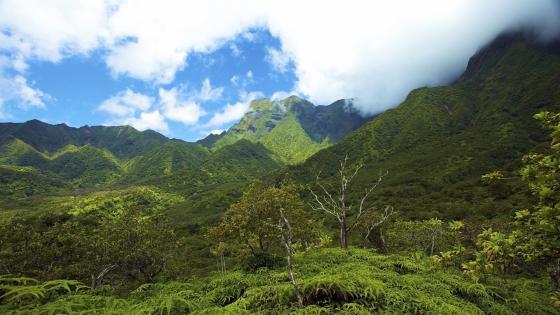Misty mountains in Hawaiian Islands wallpaper