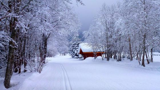 Winter landscape with a snnowy cabin wallpaper