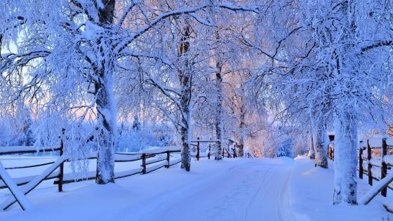 Snowy fence wallpaper