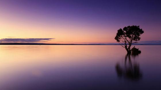 Calm sunset wallpaper
