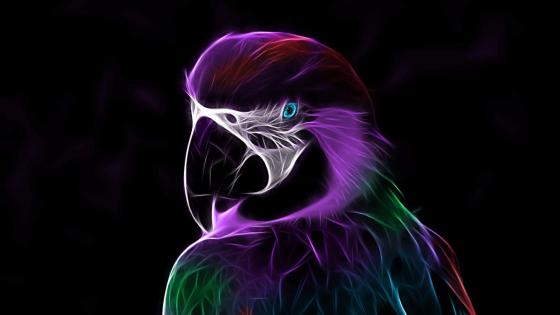 Neon light parrot wallpaper
