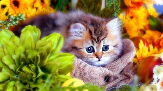 Kitten in jute bag wallpaper