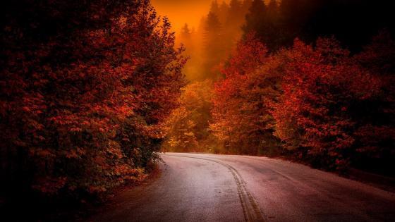 Autumn road at dusk wallpaper